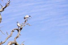 Птицы сидя на ветвях дерева Стоковая Фотография