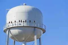 Птицы сидя на водонапорной башне Стоковая Фотография