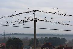 Птицы сидя на линиях электропередач Стоковые Фото