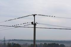 Птицы сидя на линиях электропередач Стоковое Изображение