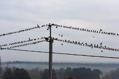 Птицы сидя на линиях электропередач Стоковые Изображения
