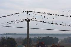 Птицы сидя на линиях электропередач Стоковое Фото
