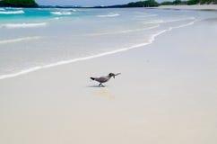 Птицы сидя на красивом пляже островов Галапагос Стоковое Изображение