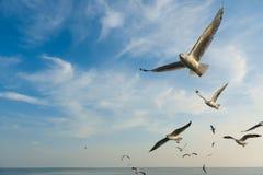 Птицы скользя на заходе солнца Стоковые Изображения