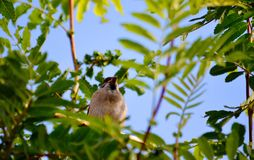 Птицы степей Стоковое фото RF