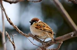 Птицы степей стоковые фото