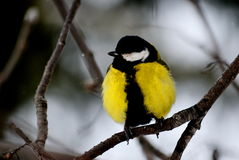 Птицы степей стоковое изображение