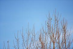 Птицы стоя на ветвях дерева с голубым небом Стоковая Фотография