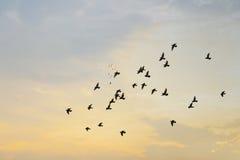 Птицы с заходом солнца Стоковые Фотографии RF