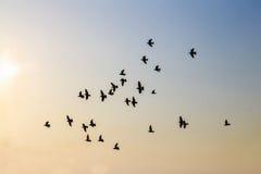 Птицы с заходом солнца Стоковые Изображения