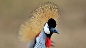 Птицы Танзании Стоковое фото RF