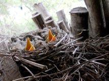 Птицы темы Стоковые Изображения