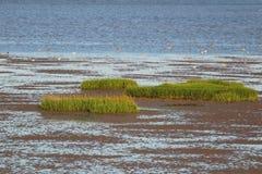 Птицы травы и заболоченного места моря Стоковое фото RF