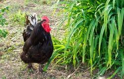Птицы фермы стоковое фото