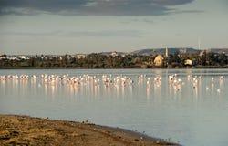 Птицы фламинго в озере Стоковое фото RF