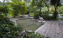 3 птицы фламенко Стоковая Фотография