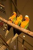 птицы цветастые Стоковые Изображения RF