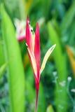 Птицы цветка рая Стоковая Фотография RF