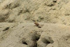 Птицы церков на песке стоковое изображение rf