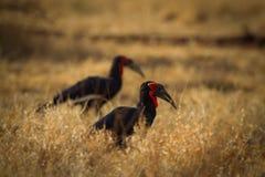 Птицы, чернота & белизна Стоковая Фотография