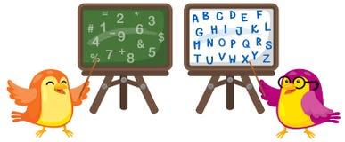 птицы шаржа уча математике и английскому языку Стоковое фото RF