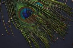 птицы экзотические Стоковое фото RF