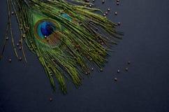 птицы экзотические Стоковая Фотография RF