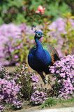 птицы Стоковое фото RF