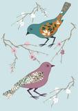 птицы 2 Стоковая Фотография RF