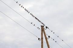 Птицы. Стоковые Фото