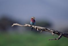 птицы Стоковые Изображения RF