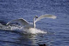 птицы Стоковая Фотография