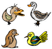 птицы Стоковая Фотография RF