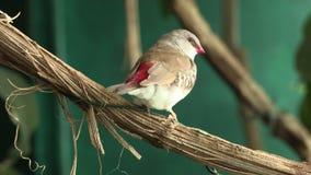 Птицы 2 сток-видео