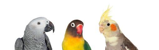 3 птицы differents тропических Стоковая Фотография RF