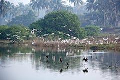 птицы flock прилетное Стоковая Фотография RF