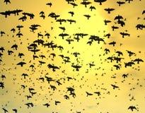 птицы fyling стоковые изображения