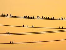 Птицы Mynas сидя на проводах и небе захода солнца Стоковое Изображение