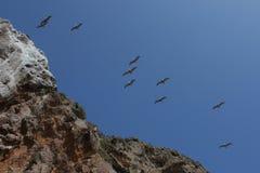 Птицы Slying над скалами Стоковая Фотография RF
