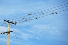 Птицы - turtledove на электрических проводах Стоковые Фото