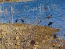 Птицы Unfoused в foucused ветви Стоковые Фото