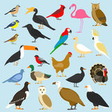 Птиц большого комплекта тропических, отечественных и других, кардинала, фламинго, сычей, орлов, облыселых, моря, попугая, гусыни  иллюстрация вектора
