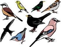 птиц Стоковое Изображение