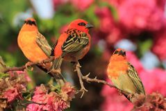 птиц Стоковая Фотография