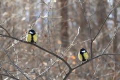 птиц Стоковые Изображения