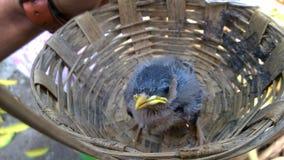 птиц Стоковые Фото