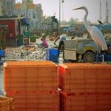 Птичий выноситель на quayside стоковые фотографии rf