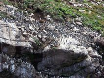 Птичий заповедник тупиков Стоковые Фотографии RF