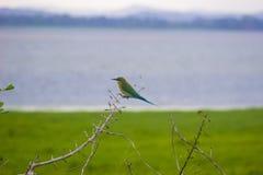 Птичий заповедник Шри-Ланка Attidiya стоковое изображение