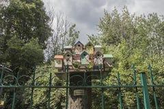 Птичий квартал Стоковая Фотография RF